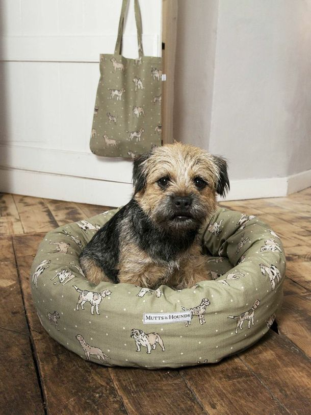 Gorgeous Border Terrier in a gorgeous Mutts & Hound x Studio Legohead bed