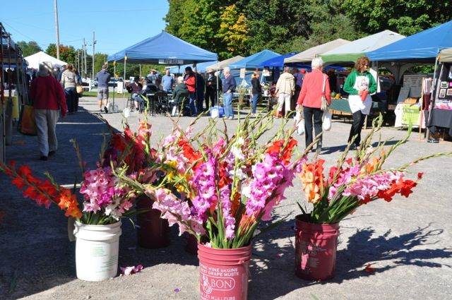 #BobcaygeonFarmersMarket #Bobcaygeon #Local #Flowers #Colourful #KawarthaLakes #CommunityConnections #CableCable