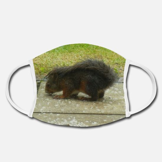eichhörnchen tier tierfreund liebe gesichtsmasken