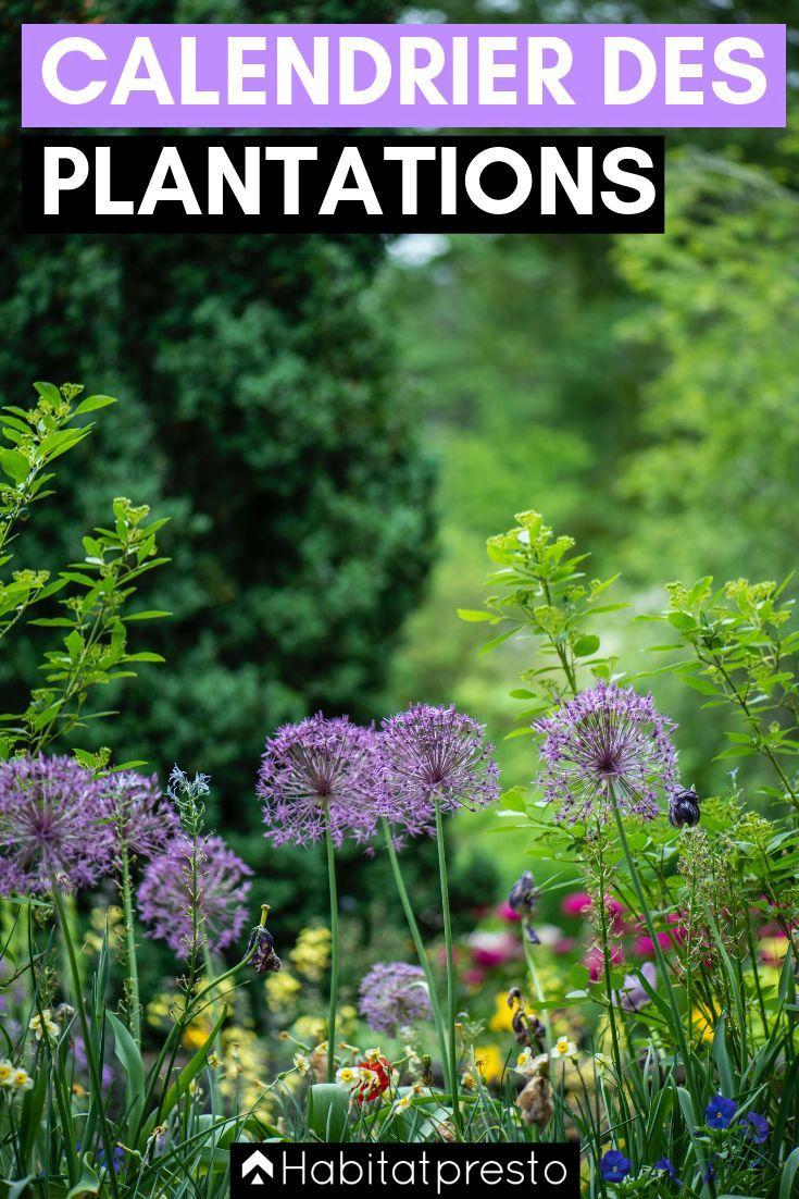 Le Jardin Potager En Janvier Épinglé sur semences