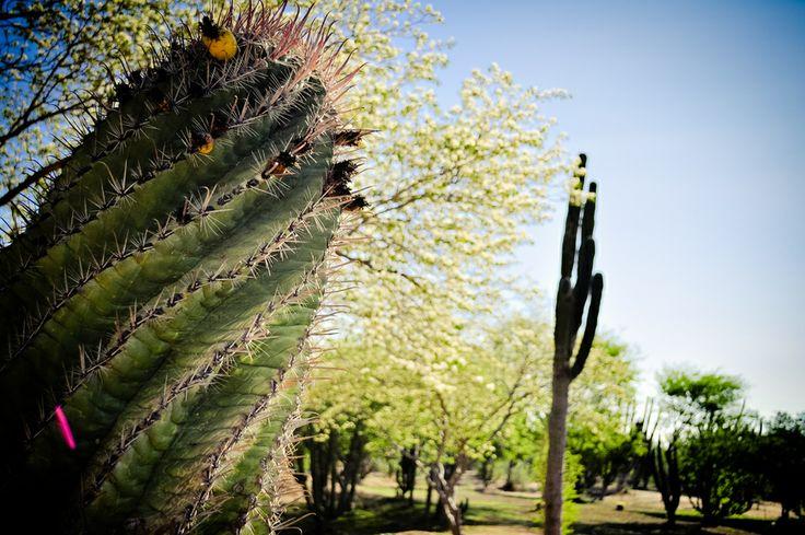 The Cactus by Eduardo De la Vega on 500px