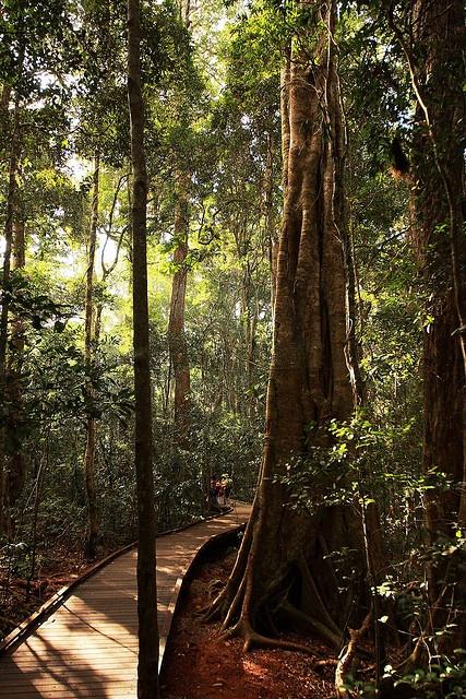 Lamington National Park,Queensland, Australia