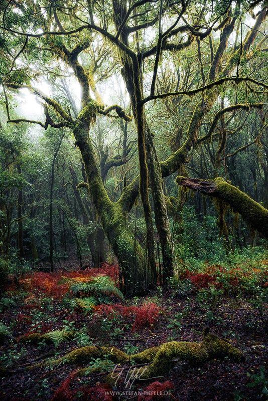 Von drauß vom Walde komm ich her... by Stefan Hefele - Photo 91902387 / 500px