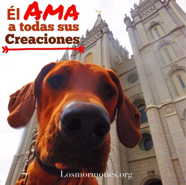 El ama a todas sus creaciones.   #mormones #sud #perros #perritos #mormon #lds #templo #amoralosanimales