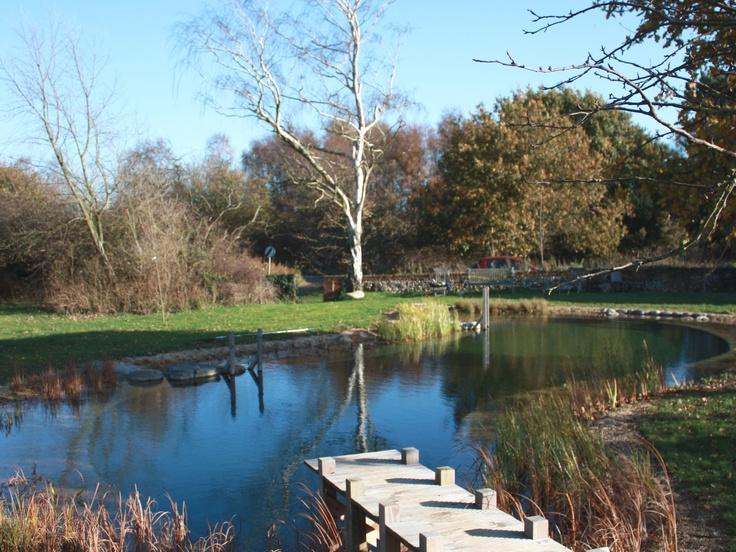 Natural Swimming Pond in November
