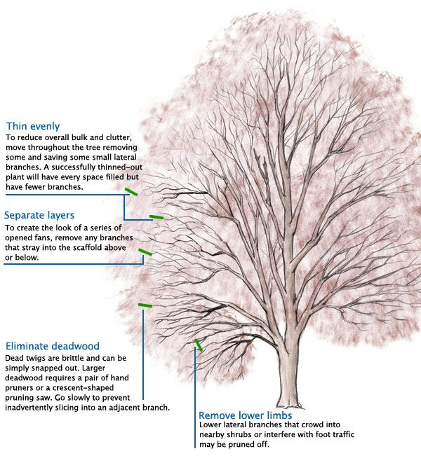 135 best images about tree 39 s for ohio on pinterest for Garden maintenance tips