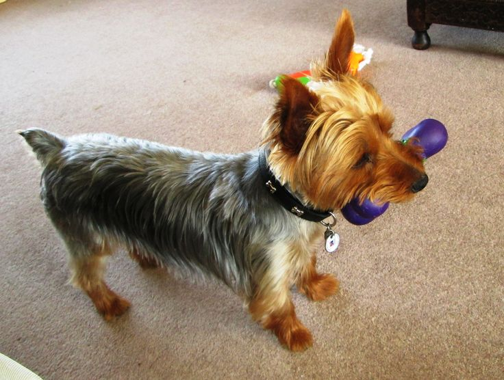 best dog toys for playtime with your dogs puppies and dogs