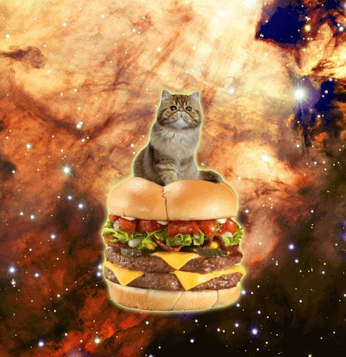 flying cheeseburger kitten