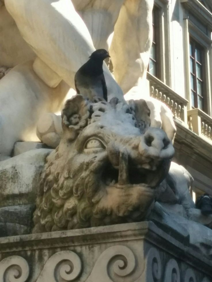 Pigeons are absolutely everywhere in the Piazza Signoria!