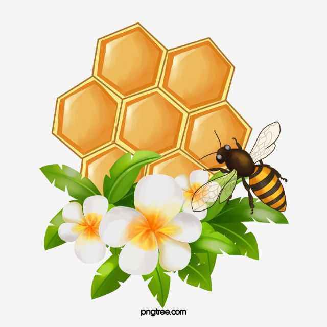 Favo De Mel Favo De Mel Clipart Favo De Mel Mel Imagem Png E Psd Para Download Gratuito Honeycomb Bee Pictures Bee Painting