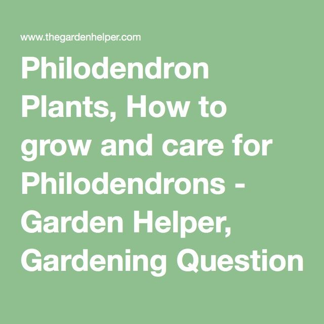 how to take care of a philodendron plant