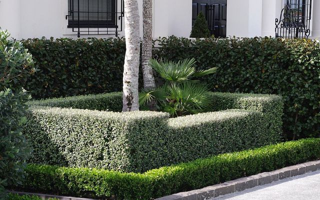Instant hedges of Corokia 'Frosted Chocolate', with Buxus 'Green Gem' in front and Michelia gracipes behind. Design by Barbara Garrett, Auck...