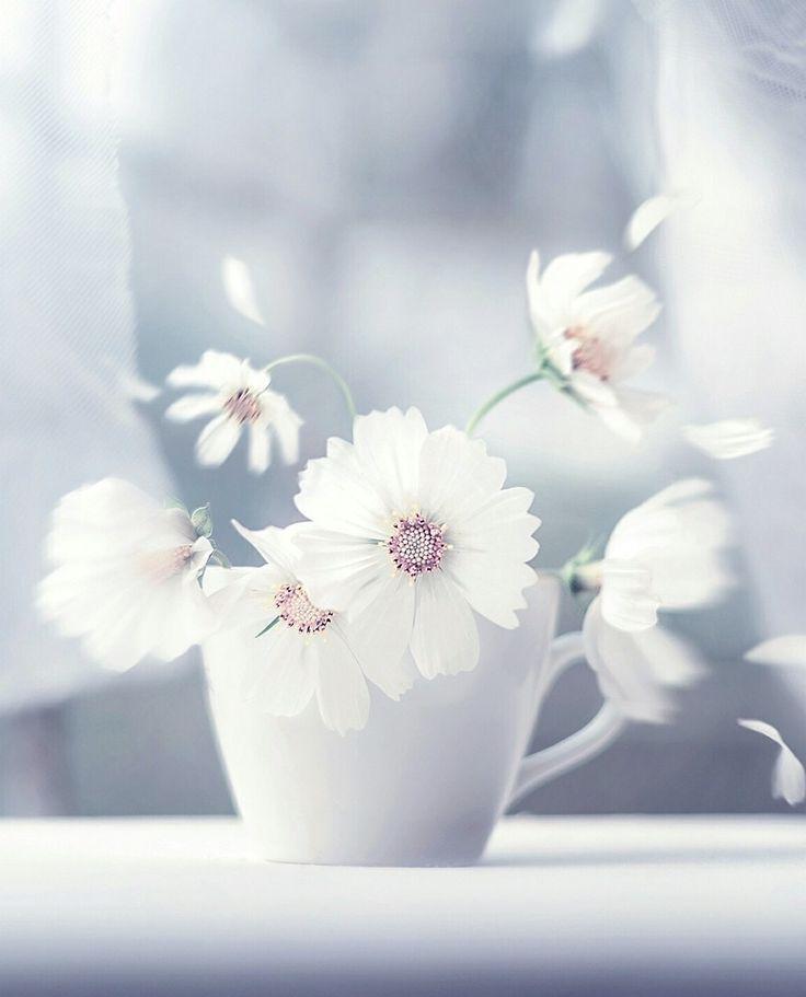 Gute Nacht, schöne Blumen!