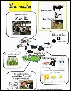 La vache - carte mentale