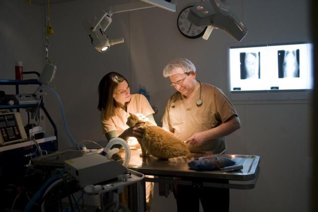 Enhance your chances of landing a job at a vet clinic by focusing on a few key areas.