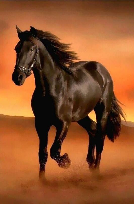 Black horse running, desert orange sunset background. Please also visit www.JustForYouPropheticArt.com for colorful prophetic art paintings, prints and stories. Thank you so much! Blessings!