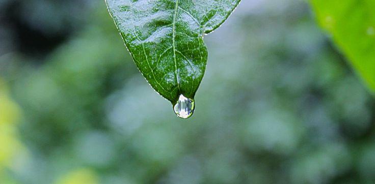 ❕ Nature plant leaf rain - get this free picture at Avopix.com    🆗 https://avopix.com/photo/39342-nature-plant-leaf-rain    #drop #leaf #rain #plant #water #avopix #free #photos #public #domain