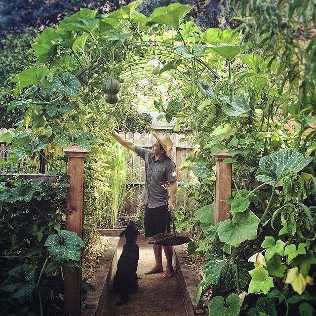 Kyle your garden is beautiful.  Who shares our opinion?  #urbangarden #gardening #UrbangardenboardUGR Credit (IG) @urbanfarmstead