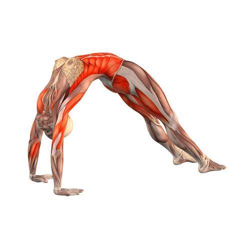 hyper-flexion lumbar vertebrae