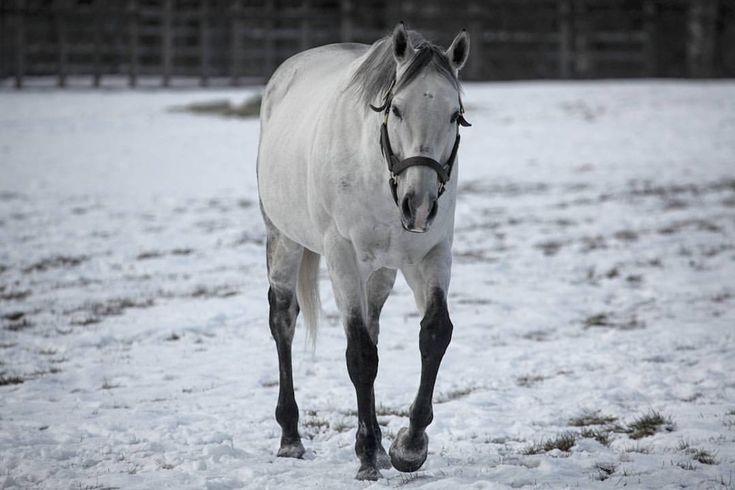 いいね!24件、コメント5件 ― よねさん(@akinobu3250)のInstagramアカウント: 「ジョーカプチーノ変顔でなく普通の写真もあります #ジョーカプチーノ #ビッグレッドファーム #競馬 #競走馬 #馬 #動物 #サラブレッド #写真を撮るのが好きな人と繋がりたい…」