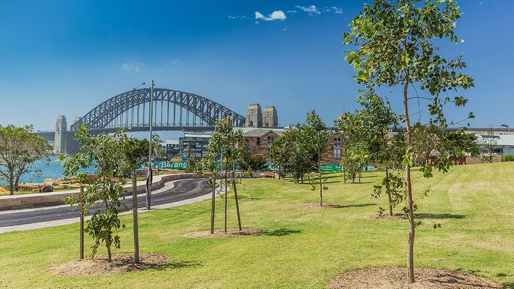 Get to know the magnificent Barangaroo Reserve and the Cutaway cultural space within the park.