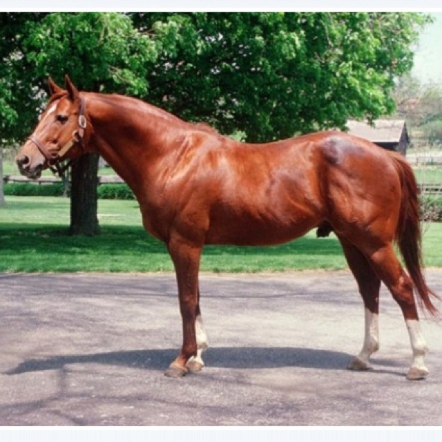 My friend Paige owns Gunnar, whose great grandsire is the amazing Secretariat