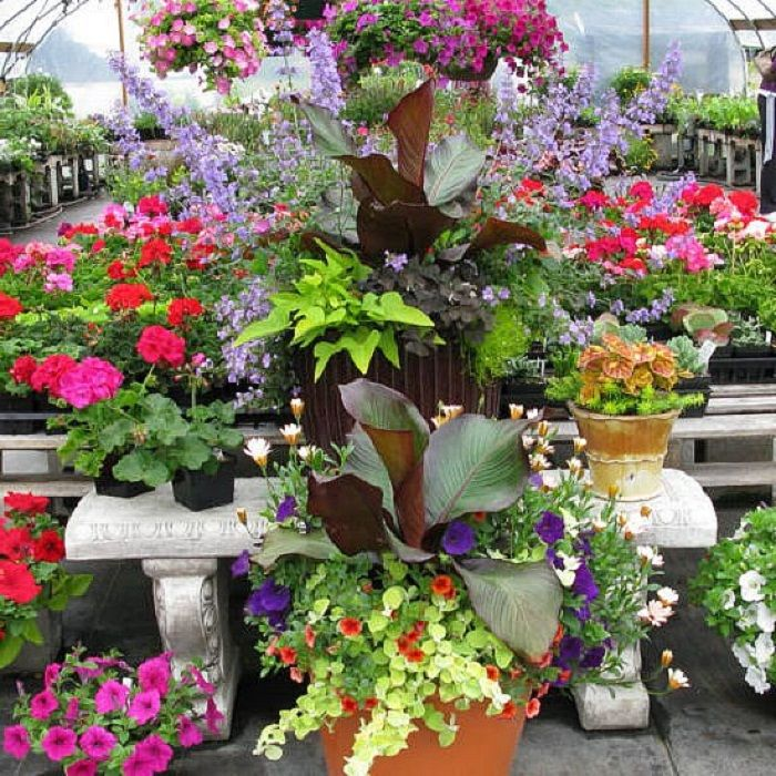 17 best images about container gardening ideas for flowers on pinterest garden ideas - Flowers for container gardening ...