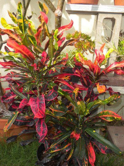 Pin On Plants 640 x 480