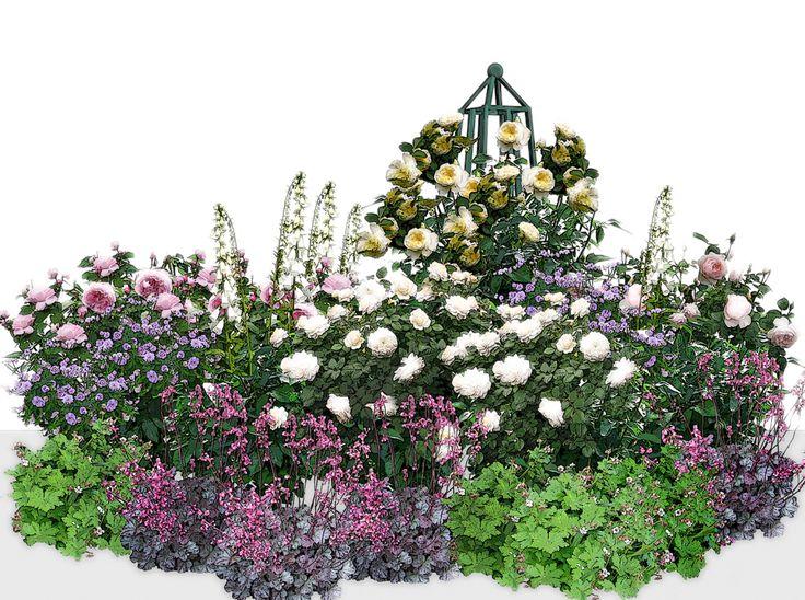 Многие настороженно относятся к сочетанию розового и желтого, но возможно, вам понравится, как эти цвета смотрятся в данной композиции. 1.Роза Mary Rose — 2 шт. 2.Роза Crocus Rose — 2 шт. 3.Роза The Pilgrim — 1 шт. 4.Роза Gentle Hermione — 1 шт. 5.Герань луговая — 2 шт. (предпочтительные сорта: Summer Skies, Plenum violaceum). 6.Герань крупнокорневищная — 4 шт. 7.Гейхера — 3 шт. (предпочтительные сорта: Midnight Rose, Rachel, Swirling Fantasy). 8.Наперстянка — 3 шт.