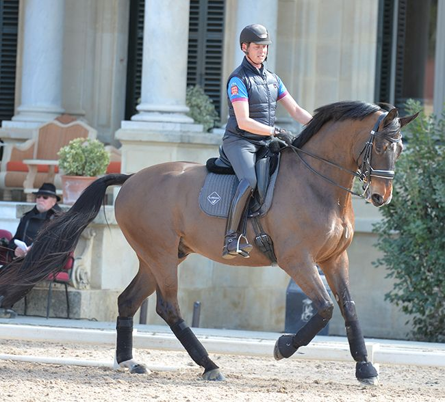 Talking Dressage with Carl Hester | The Horse Magazine – Australia's Leading…