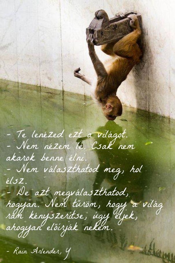 Természetes éltemód vega paleo organikus élet világ ekönyv szöveg Y Rain Arlender http://syllabux.hu/books/y?id=164