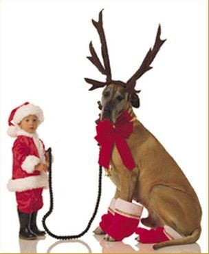 Santa and his Dogdeer...so cute!Great Danes, Christmas Cards, Cards Ideas, Photo Ideas, Kids And Pets At Christmas, Santa Picture Ideas For Kids, Cute Ideas, Merry Christmas, Big Dogs