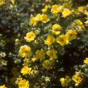 89 best Small trees And Shrubs images on Pinterest Flowers