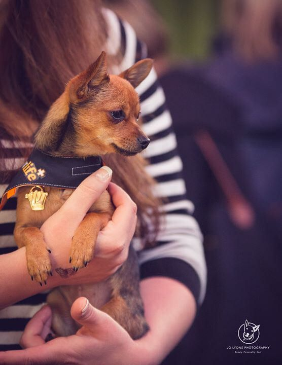Last Saturday Elna Kubur Photography and I had the pleasure of photographing the Pie Slice Puppies Pub Day which was also a celebration of Life of Pikelet's 2nd Gotcha Day at the Balmain Hotel. An awesome day was had by all and the weather didn't hold any