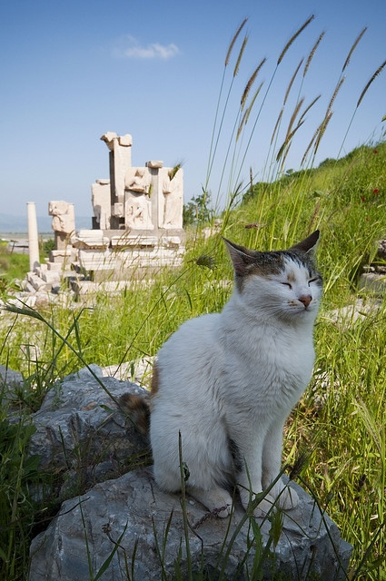 Ephesus.....and..CAT... I've been here and there are cats EVERYWHERE! They let you pet them and will even sit on your lap.