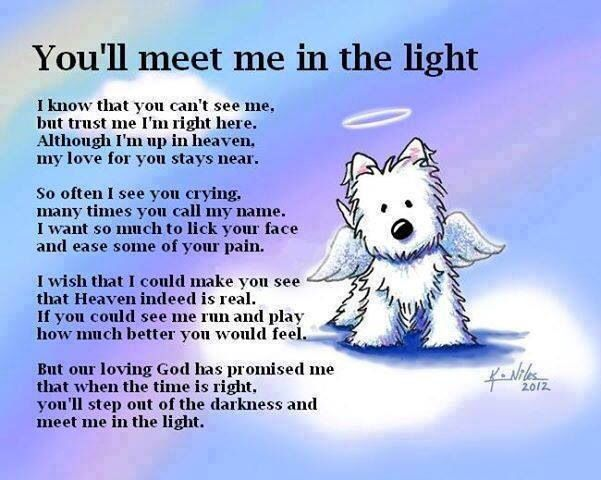 Beautiful tribute for anyone who loses a beloved pet.