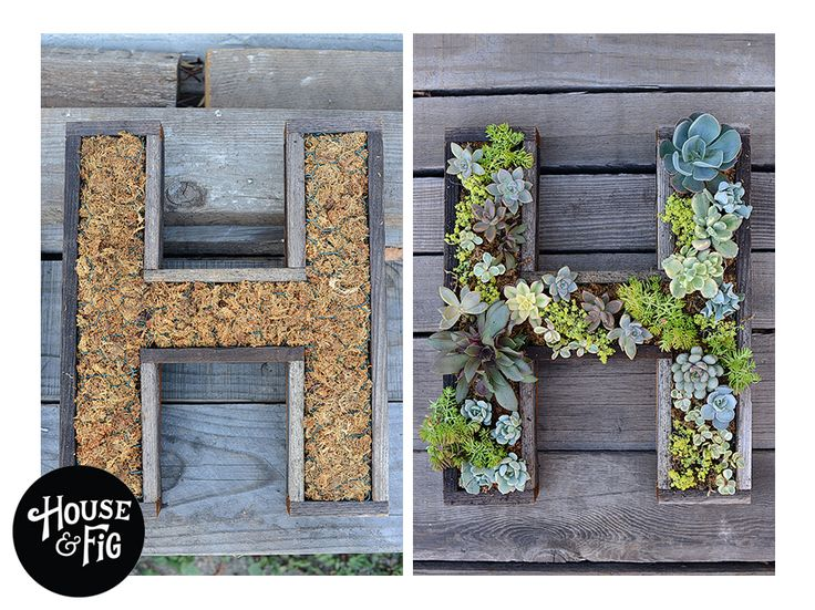 Lettres bois et plantes grasses