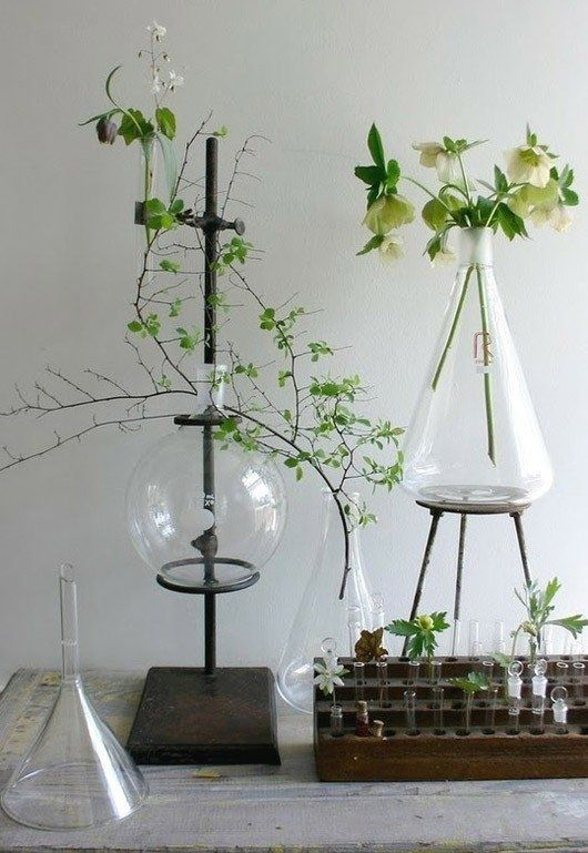95 best nature environment images on pinterest floral this would be interesting decor for a wedding reception vintage glass science beakers and test tubes as vases fandeluxe Image collections