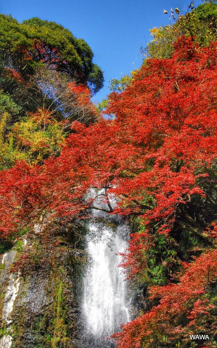 箕面大滝の紅葉 大阪府 Panoramio - Photo explorer