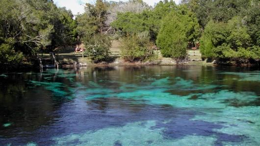 Silver Glen Springs | The clear blue water and bubbling sand boils of Silver Glen Springs is a stark contrast to the surrounding Big Scrub in the Ocala National Forest.