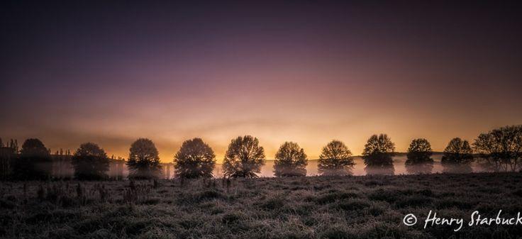 Trees by Henry Starbuck on www.digitalgallery.co.za