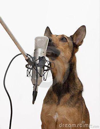 De kinderen leren over :honden, katten, knaagdieren, vogels en vissen •hoe ze eruit zien; •wat ze eten; •hoe je ze kunt verzorgen; •hun kenmerken. •  De kinderen maken : •als inleiding een onderzoekje naar het aantal huisdieren in de klas; •als afsluiting een boekje met informatie over huisdier ( deze kiezen ze zelf uit).  De kinderen begrijpen : •dat het nemen van een huisdier je verantwoordelijk maakt voor de zorg van dit dier.  •dat je dus veel van een dier moet weten om hem goed…