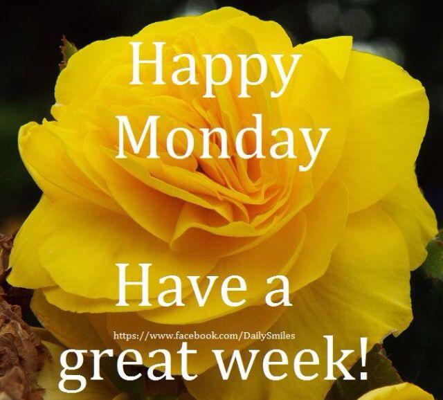 Best 25 happy monday images ideas on pinterest good morning happy monday voltagebd Gallery