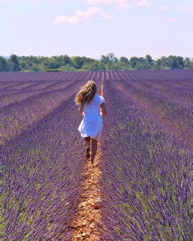 Lavender bloom!!  Valensole Provence (jun/15). Enlouqueciii com as lavandas na Provence sim ou com certeza? São centenas de campos mas os mais lindos que pegamos na viagem foi na região de Valensole. Parece que os de Sault também são incríveis mas costumam florescer mais tarde (boa opção para quem vai no final de julho). #aboutmytrips #aboutmytripsfrança by aboutmytrips