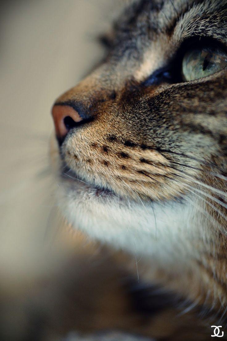 ... Nez sur Pinterest | Bull Terriers, Nez De Chien et Taureau Anglais
