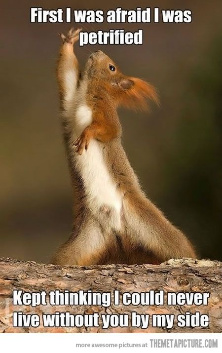 Dramatic Squirrel, how about Disco Squirrel?  hehe