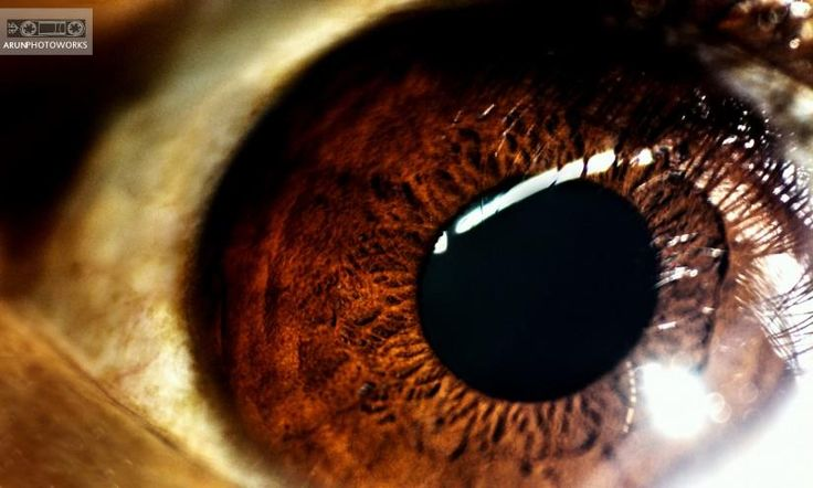 """my first macro shot of my eye @ low light.. - Photography by Arun Photography in what """"Eye"""" see.. at touchtalent"""