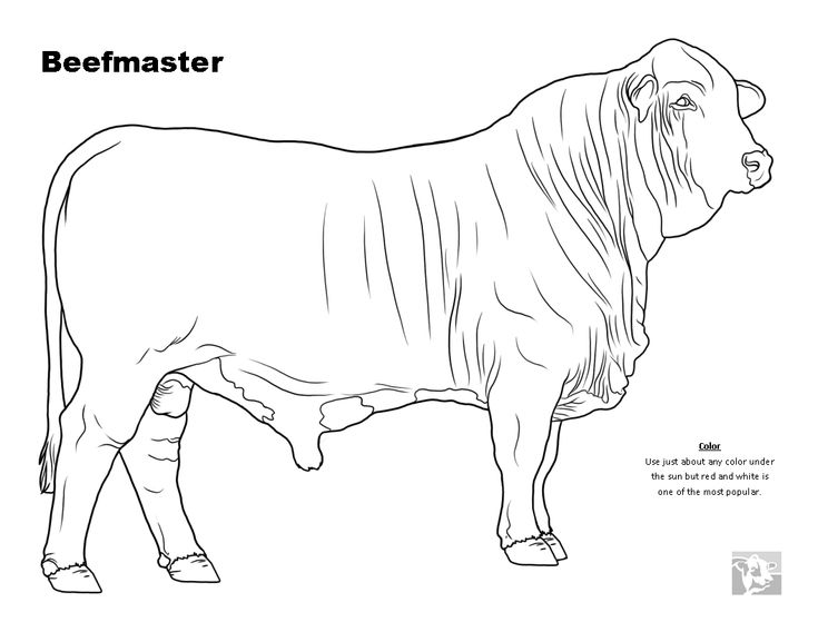 cattle breed coloring pages beefmaster animal science