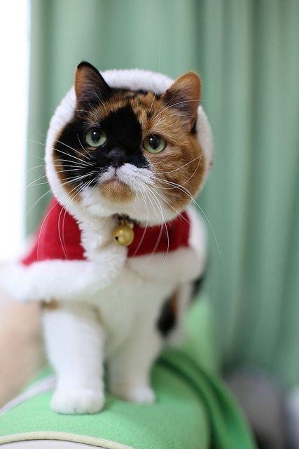 I really want Santa to be a Cat! :))))