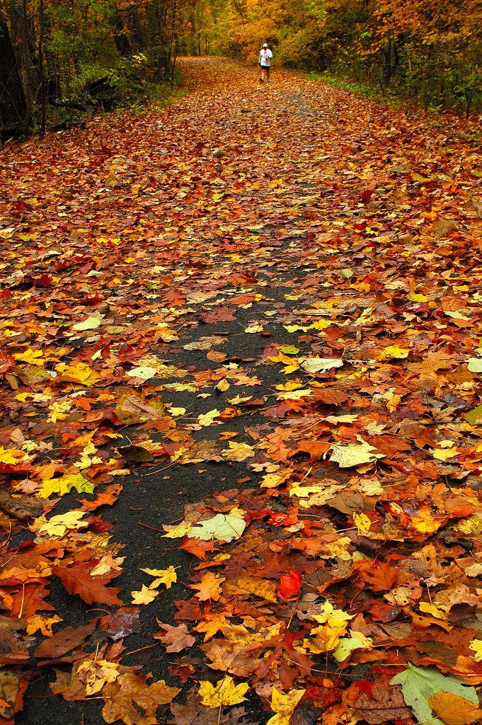 An Autumn Path, Monte Sano State Park, Alabama
